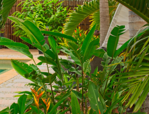 How to create a tropical garden on a budget