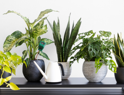 Four low maintenance indoor plants